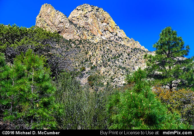 Pine Tree Trail (Pine Tree Trail Picture 025 - March 25, 2016 from Organ Mountains-Desert Peaks National Monument, New Mexico)