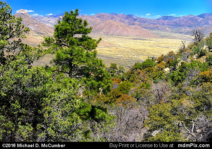 Pine Tree Trail (Pine Tree Trail Picture 040 - March 25, 2016 from Organ Mountains-Desert Peaks National Monument, New Mexico)
