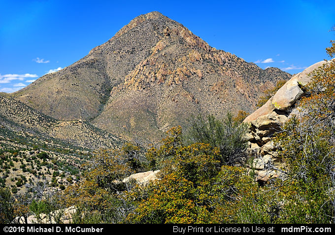 Pine Tree Trail (Pine Tree Trail Picture 045 - March 25, 2016 from Organ Mountains-Desert Peaks National Monument, New Mexico)