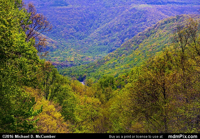 Kentuck Knob Overlook with Spring Foliage
