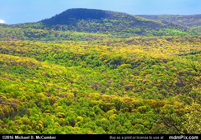 Sugarloaf Knob (Sugarloaf Knob Picture 020 - May 8, 2016 from Ohiopyle State Park, Pennsylvania)