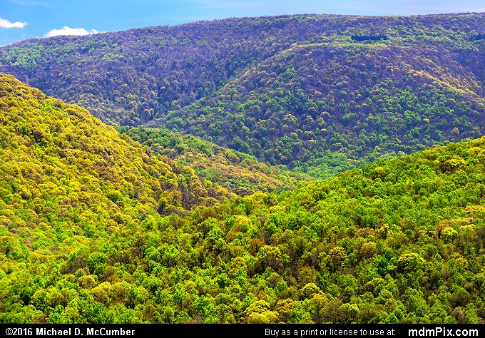 Tharp Knob Overlook (Tharp Knob Overlook Picture 022 - May 8, 2016 from Ohiopyle State Park, Pennsylvania)