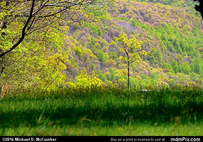 Tharp Knob Overlook (Tharp Knob Overlook Picture 024 - May 8, 2016 from Ohiopyle State Park, Pennsylvania)