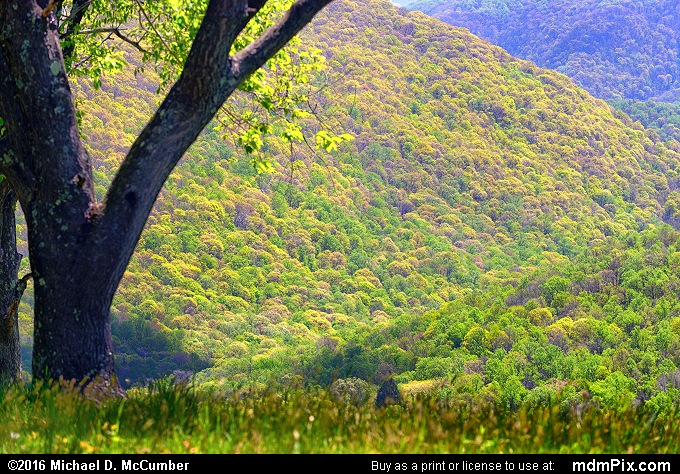 Tharp Knob Overlook (Tharp Knob Overlook Picture 025 - May 8, 2016 from Ohiopyle State Park, Pennsylvania)