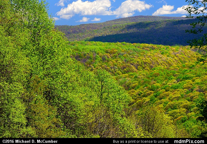 Kentuck Trail (Kentuck Trail Picture 026 - May 8, 2016 from Ohiopyle State Park, Pennsylvania)