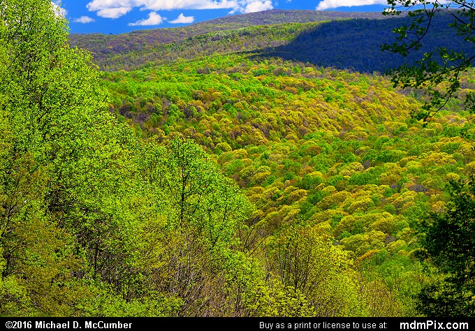 Kentuck Trail (Kentuck Trail Picture 027 - May 8, 2016 from Ohiopyle State Park, Pennsylvania)