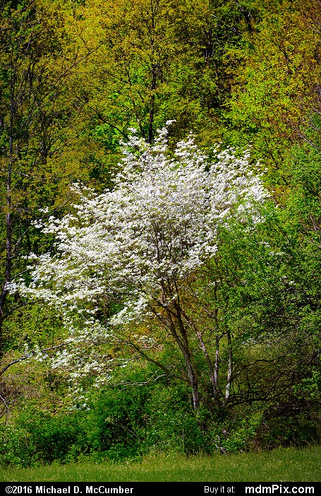 Oak-Hickory Forest (Oak-Hickory Forest Picture 030 - May 8, 2016 from Ohiopyle State Park, Pennsylvania)