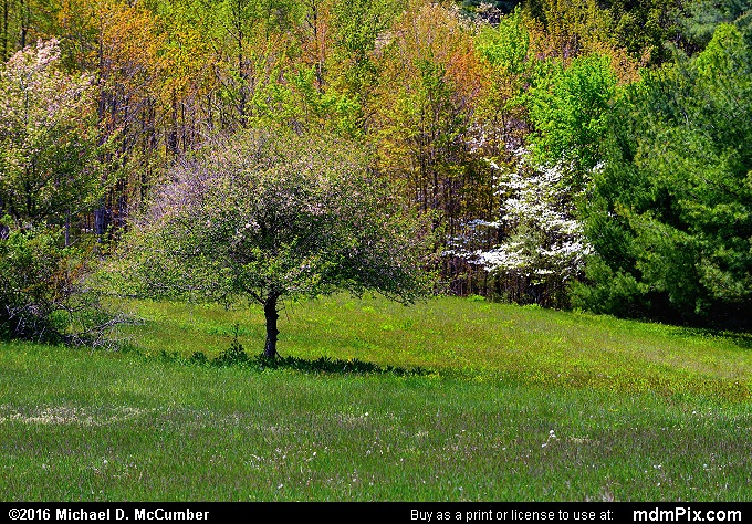Kentuck Trail (Kentuck Trail Picture 031 - May 8, 2016 from Ohiopyle State Park, Pennsylvania)
