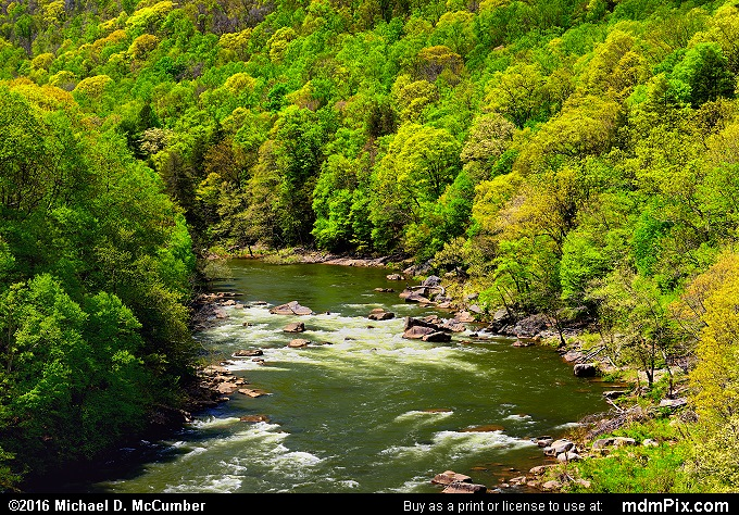 Youghiogheny River (Youghiogheny River Picture 040 - May 8, 2016 from Ohiopyle State Park, Pennsylvania)