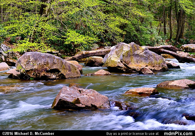 Meadow Run (Meadow Run Picture 054 - May 8, 2016 from Ohiopyle State Park, Pennsylvania)