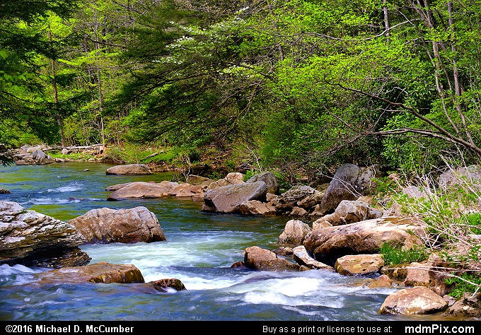 Meadow Run (Meadow Run Picture 056 - May 8, 2016 from Ohiopyle State Park, Pennsylvania)