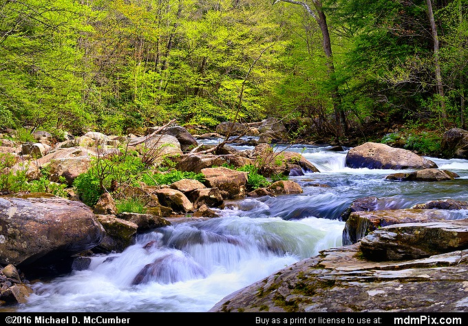 Meadow Run (Meadow Run Picture 060 - May 8, 2016 from Ohiopyle State Park, Pennsylvania)