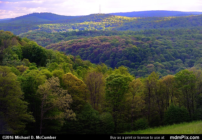 Allegheny Plateau (Allegheny Plateau Picture 012 - May 16, 2016 from Mill Run, Pennsylvania)