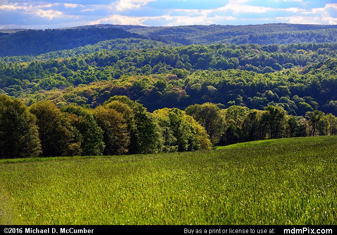 Farm Pasture (Farm Pasture Picture 014 - May 16, 2016 from Mill Run, Pennsylvania)