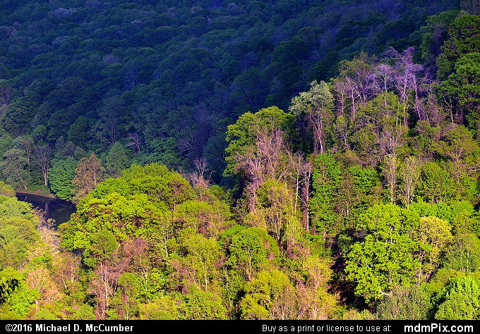 Youghiogheny Gorge (Youghiogheny Gorge Picture 027 - May 16, 2016 from Ohiopyle State Park, Pennsylvania)