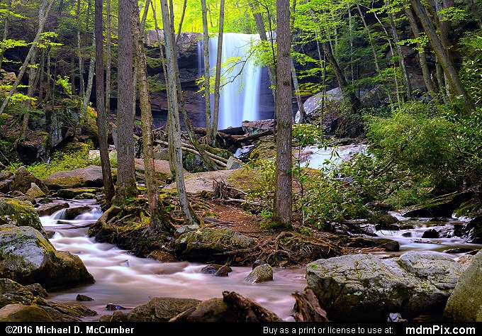 Cucumber Run (Cucumber Run Picture 048 - May 16, 2016 from Ohiopyle State Park, Pennsylvania)