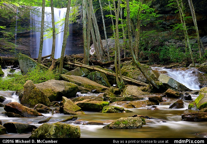 Cucumber Run (Cucumber Run Picture 049 - May 16, 2016 from Ohiopyle State Park, Pennsylvania)