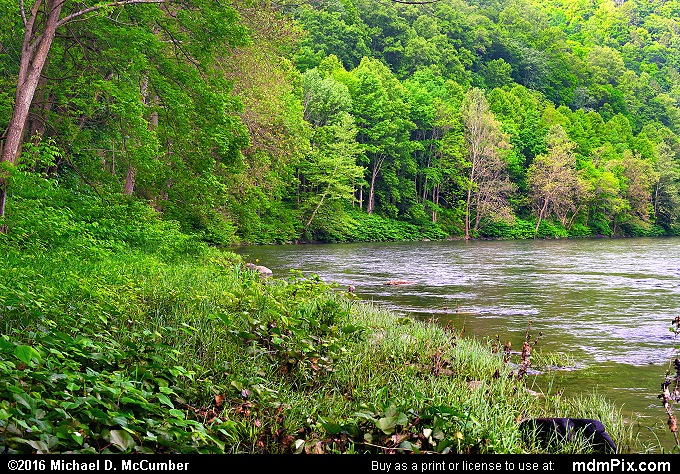 Youghiogheny River (Youghiogheny River Picture 007 - May 30, 2016 from Dunbar Township, Pennsylvania)