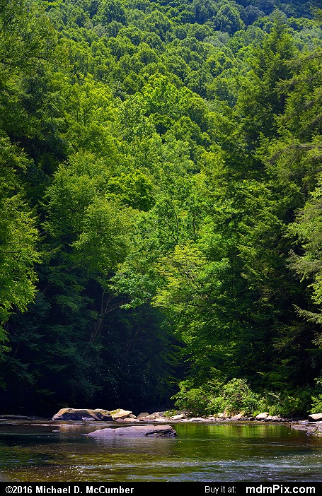 Indian Creek Gorge (Indian Creek Gorge Picture 018 - July 10, 2016 from Mill Run, Pennsylvania)