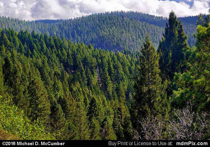 Endless Spruce Fir Forest in Sacramento Mountains