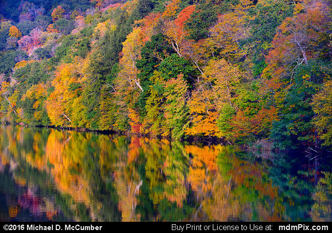 Laurel Hill Lake (Laurel Hill Lake Picture 036 - October 15, 2016 from Laurel Hill State Park, Pennsylvania)