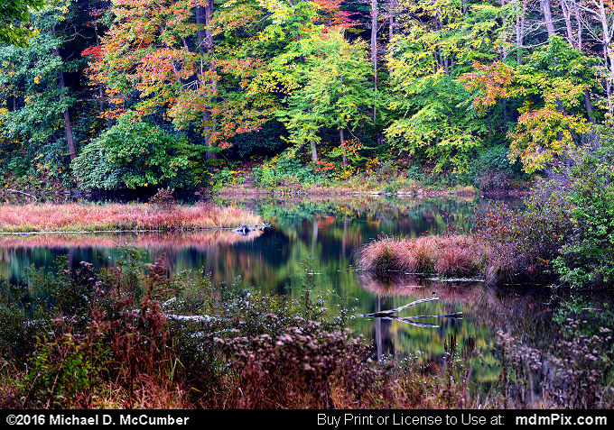 Laurel Hill Lake (Laurel Hill Lake Picture 067 - October 15, 2016 from Laurel Hill State Park, Pennsylvania)