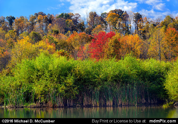 Cattails (Cattails Picture 009 - October 16, 2016 from Mill Run, Pennsylvania)