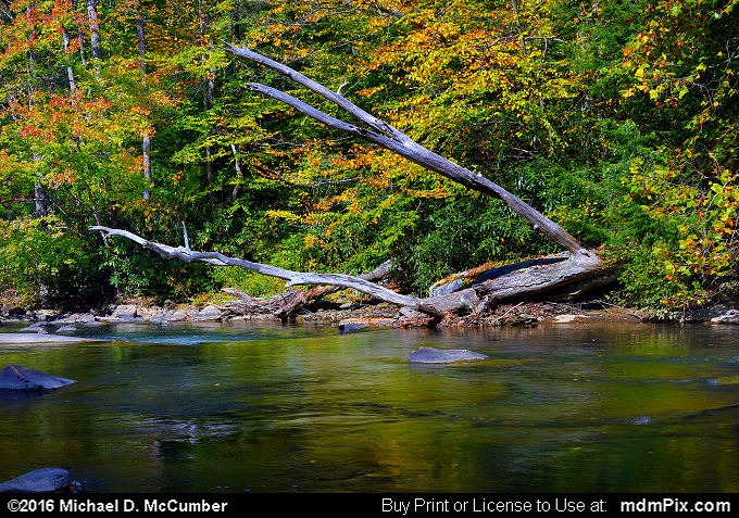 Indian Creek (Indian Creek Picture 023 - October 16, 2016 from Mill Run, Pennsylvania)