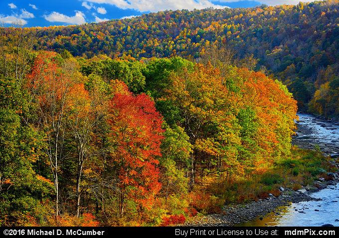 Pinkerton Horn Peninsula in Casselman River in Fall