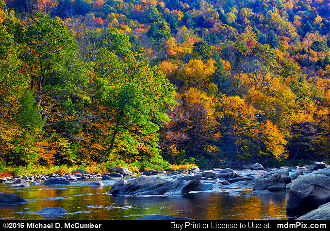 Casselman River with Laurel Highlands' Fall Foliage