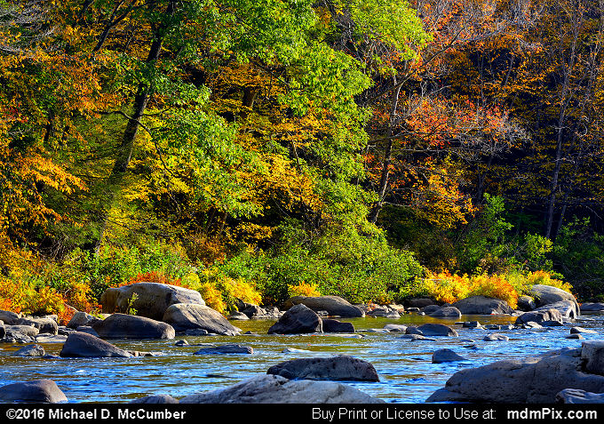 Casselman River (Casselman River Picture 017 - October 18, 2016 from Upper Turkeyfoot Township, Pennsylvania)