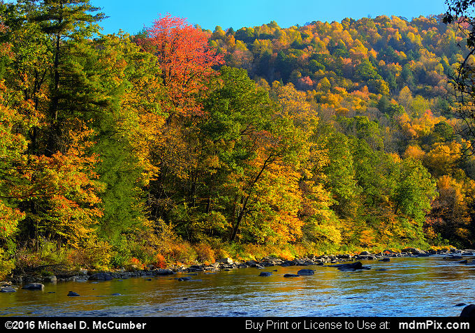 Casselman River (Casselman River Picture 020 - October 18, 2016 from Upper Turkeyfoot Township, Pennsylvania)