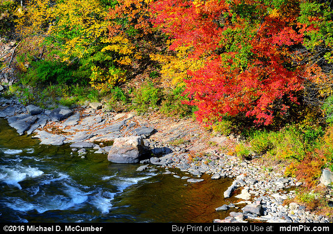 Fall Foliage (Fall Foliage Picture 045 - October 18, 2016 from Upper Turkeyfoot Township, Pennsylvania)