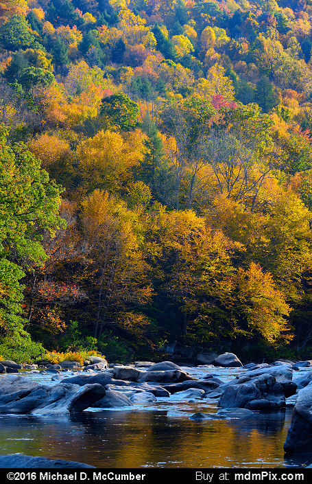 Casselman River (Casselman River Picture 054 - October 18, 2016 from Upper Turkeyfoot Township, Pennsylvania)