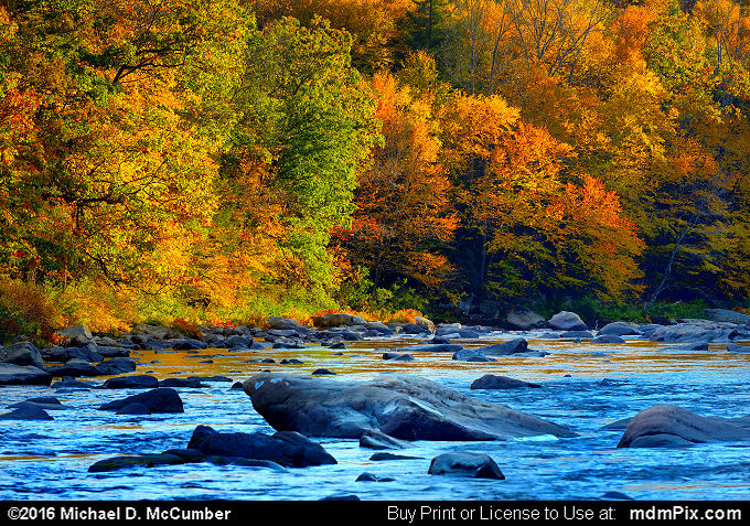 Casselman River (Casselman River Picture 059 - October 18, 2016 from Upper Turkeyfoot Township, Pennsylvania)