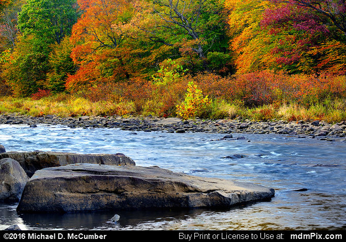 Autumn Palette of Color along Casselman River