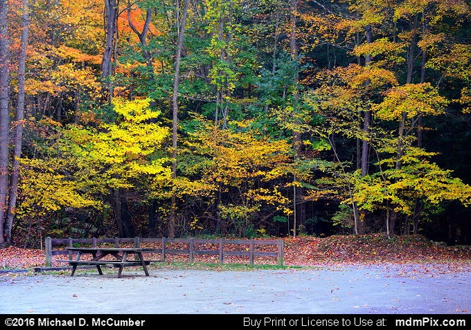 Fall Foliage (Fall Foliage Picture 069 - October 18, 2016 from Markleton, Pennsylvania)