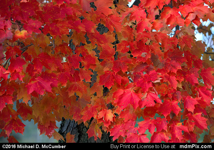 Fall Foliage (Fall Foliage Picture 006 - October 19, 2016 from Somerset, Pennsylvania)