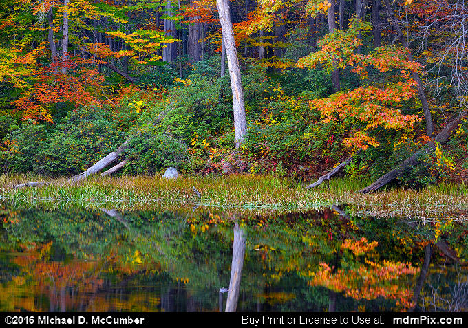 Jones Mill Pond (Jones Mill Pond Picture 099 - October 19, 2016 from Laurel Hill State Park, Pennsylvania)