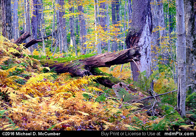 Log (Log Picture 129 - October 19, 2016 from Laurel Hill State Park, Pennsylvania)