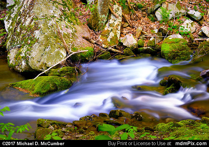Roaring Run (Roaring Run Picture 019 - May 15, 2017 from Roaring Run Natural Area, Pennsylvania)