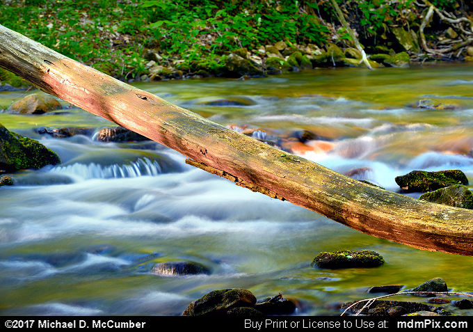 Log (Log Picture 026 - May 15, 2017 from Roaring Run Natural Area, Pennsylvania)