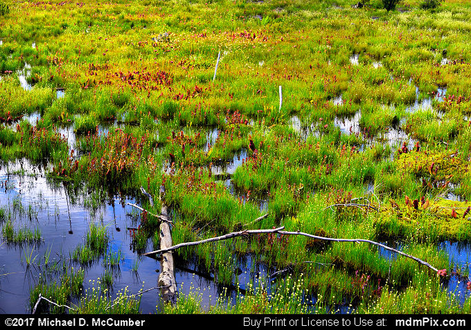 Spruce Flats Bog (Spruce Flats Bog Picture 011 - July 15, 2017 from Cook Township, Pennsylvania)