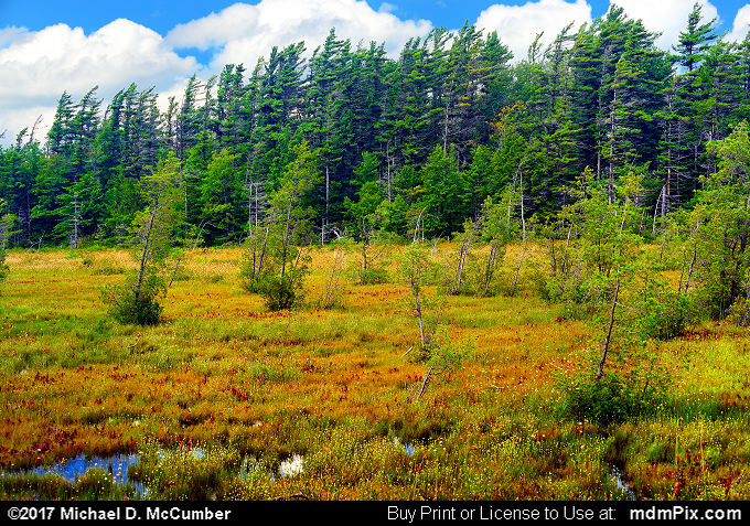 Spruce Flats Bog (Spruce Flats Bog Picture 013 - July 15, 2017 from Cook Township, Pennsylvania)