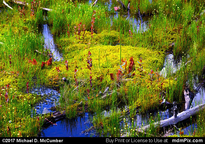 Spruce Flats Bog (Spruce Flats Bog Picture 014 - July 15, 2017 from Cook Township, Pennsylvania)