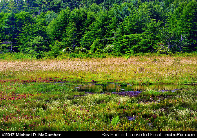 Spruce Flats Bog (Spruce Flats Bog Picture 015 - July 15, 2017 from Cook Township, Pennsylvania)