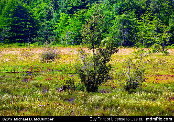 Spruce Flats Bog (Spruce Flats Bog Picture 016 - July 15, 2017 from Cook Township, Pennsylvania)