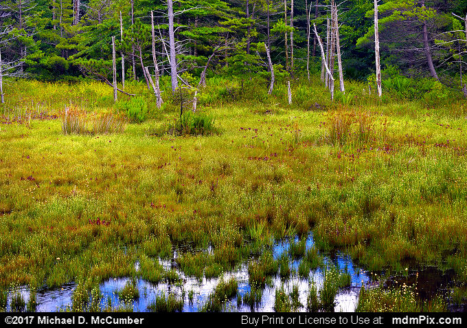 Spruce Flats Bog (Spruce Flats Bog Picture 017 - July 15, 2017 from Cook Township, Pennsylvania)