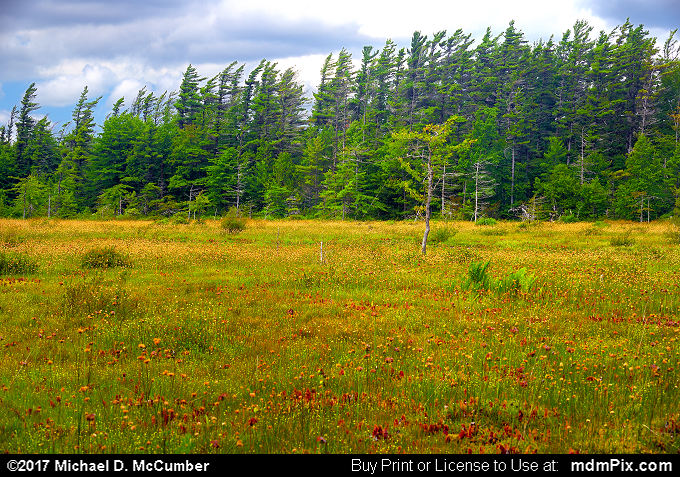 Spruce Flats Bog (Spruce Flats Bog Picture 019 - July 15, 2017 from Cook Township, Pennsylvania)