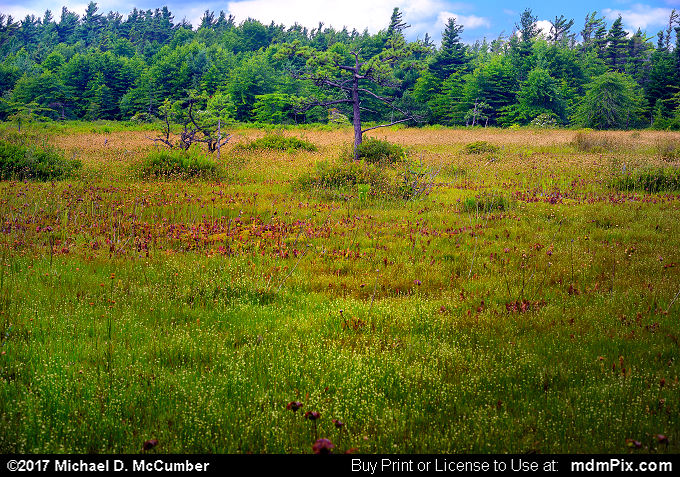 Spruce Flats Bog (Spruce Flats Bog Picture 024 - July 15, 2017 from Cook Township, Pennsylvania)